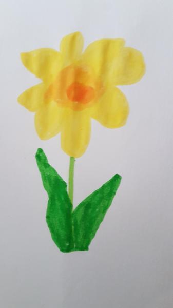 Jacob's Daffodil