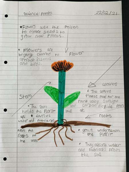 Shreya's science work
