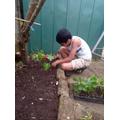 Abel gardening.