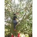 Luckily teachers can climb trees!