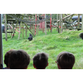 We were amazed by the chimpanzees.