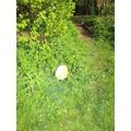 An egg shell!