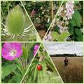 Emilia's Nature Photos.jpg