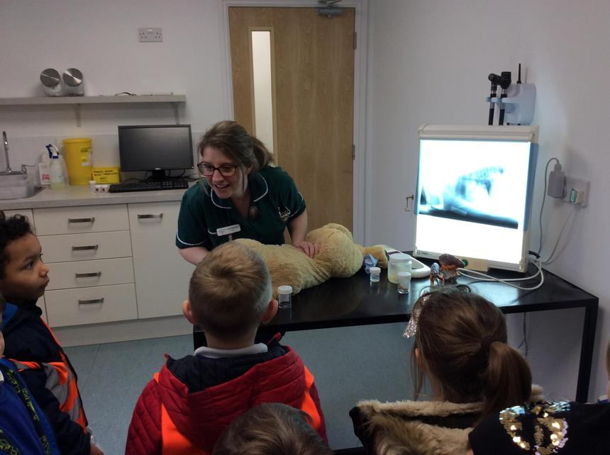 Learning about the role of a Veterinary Nurse.