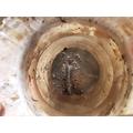 Dylan's Crayfish.jpg