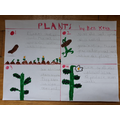 Ben's plant life cycle