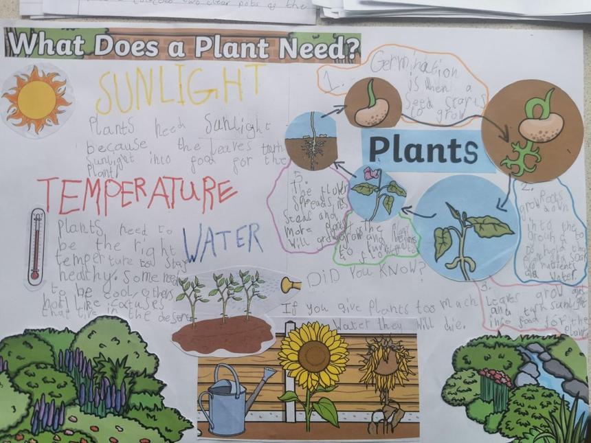 Tallulah's plant poster