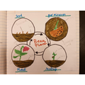 The life cycle of a plant by Finlay
