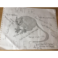 George's Water Vole Poster