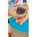 Mateusz - New Pet Hamster