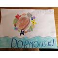 Emilia's Dormouse.jpg