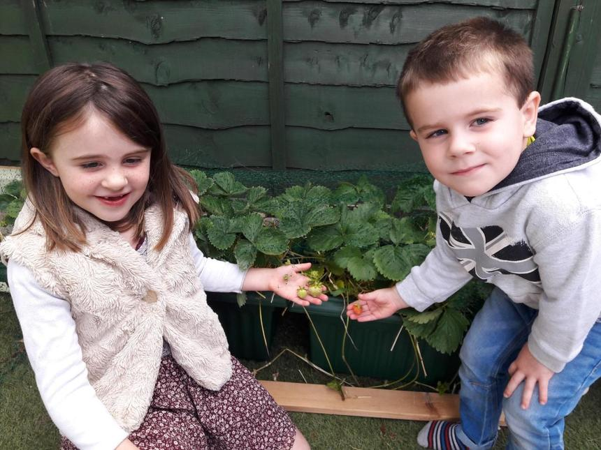 Growing their own food in the garden