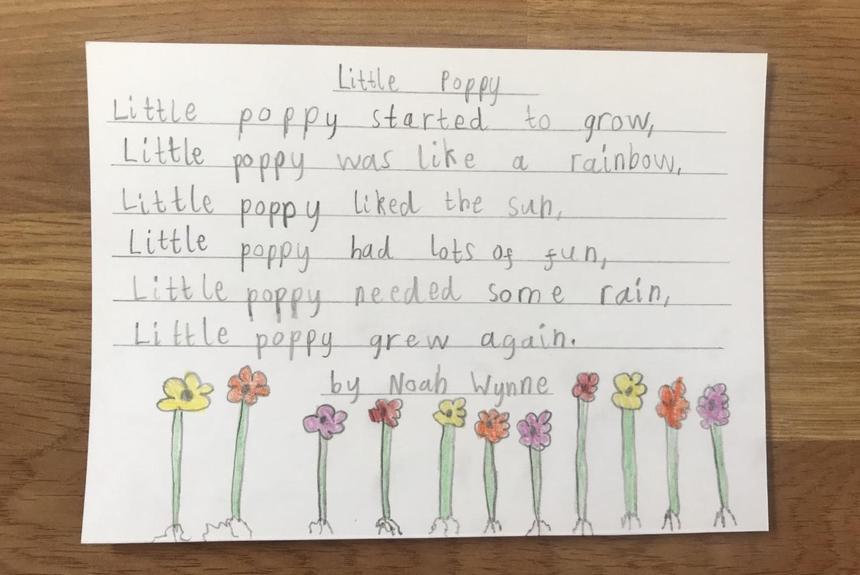 Little Poppy poem by Noah