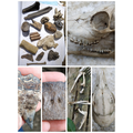 Jackson's fossil finds!