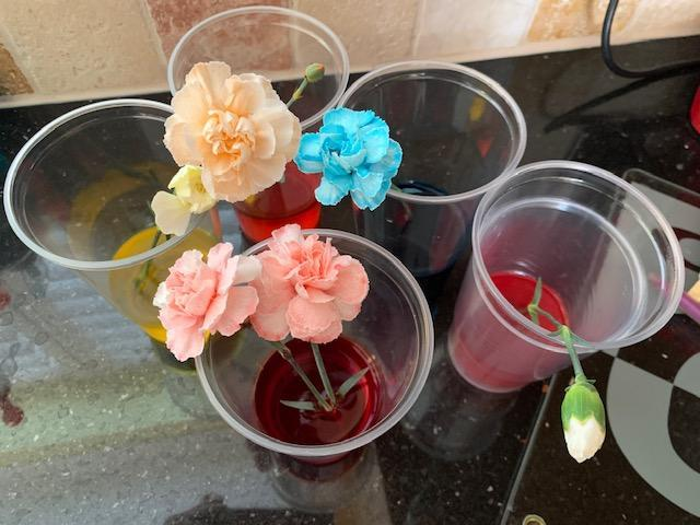 A great flower experiment by Lucas