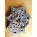 Emilia's Fossils.jpg