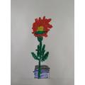 Jayden's flowering plant.