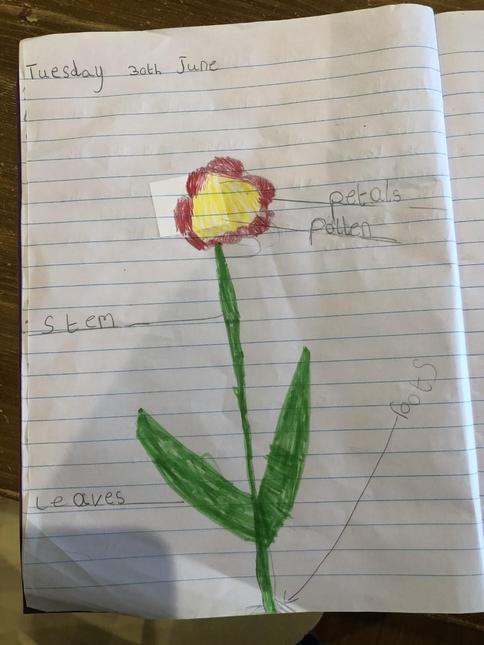 Pippa's flower