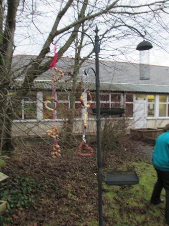 our bird feeders hanging in the school garden