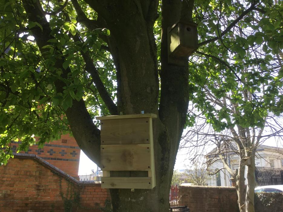 New bat box