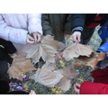 We compared our winter leaves with autumn leaves