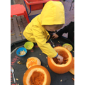 Scooping out our pumpkins.
