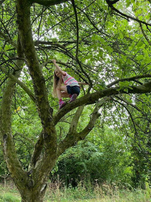 More tree climbing