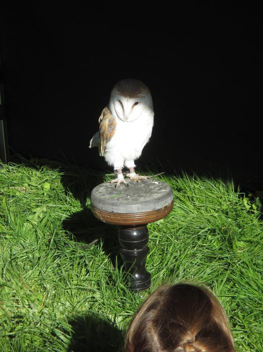 We met Skye, a barn owl