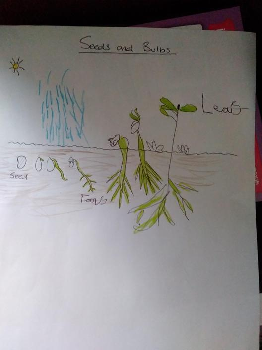 Great drawing and  labeling of a plant Megan.