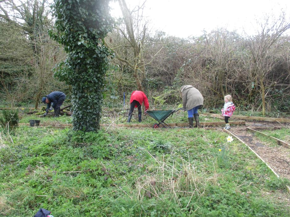 Clearing brambles.