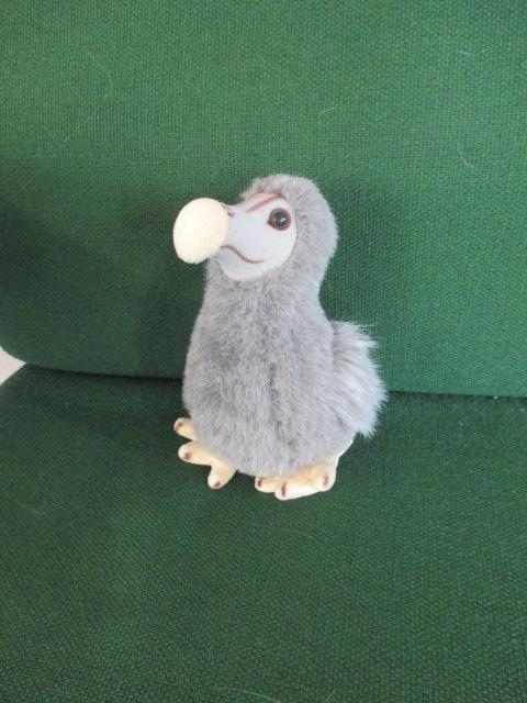 Meet Daisy the Dodo
