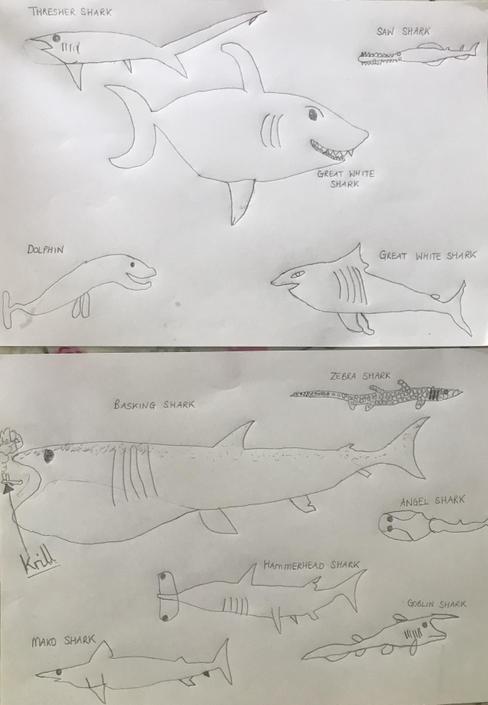 Look at Williams fantastic sharks!