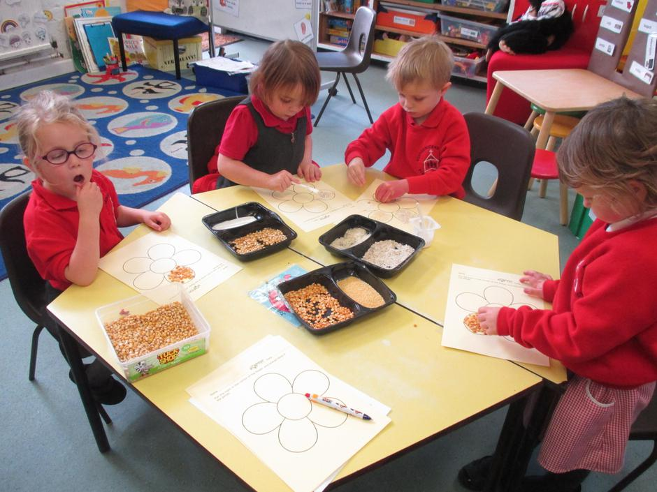 Seed collages