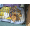 Poppy the Puppy snoozing on her visit to school