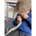 Investigating snake skin