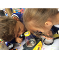 Looking at caterpillars we found