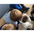 Holly the hedgehog came back to visit us