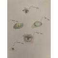 Amelia eye details