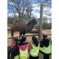 Y2 trip to London Zoo