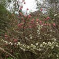 Blossom in our outdoor learning area.
