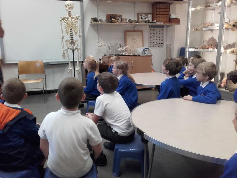 Meeting the human skeleton