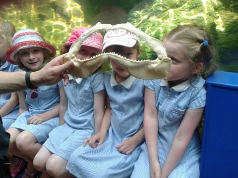 Aquarium Learning