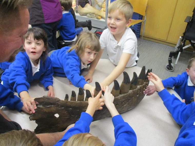 This is the jaw of a Tyrannosaurus rex!