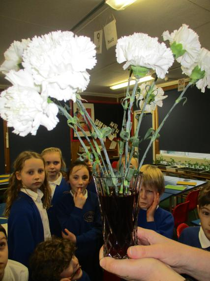White carnations with food colouring