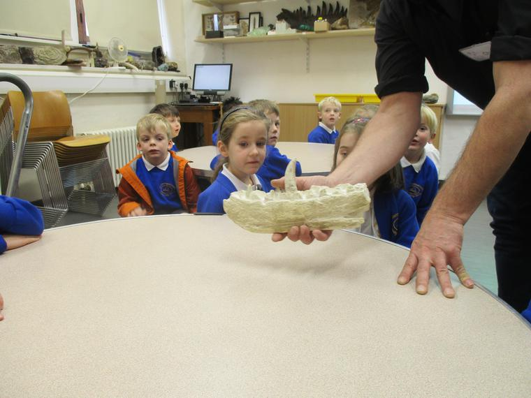 Examining the jaw of a Megalosaurus!