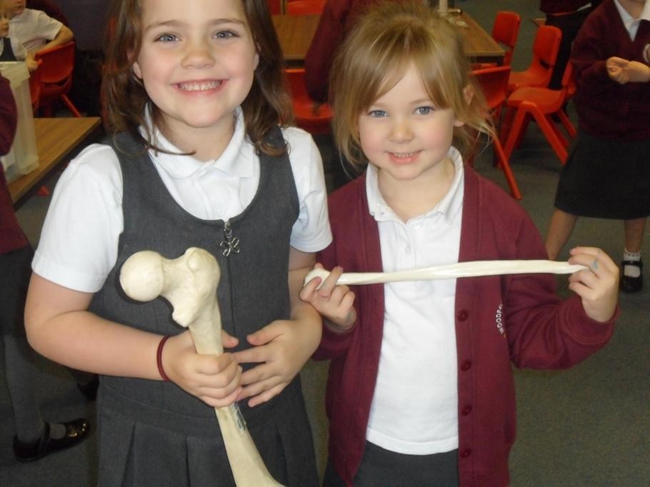 We found a thigh bone!