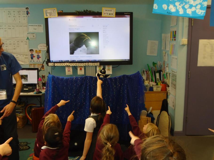 Penguin Puppet show fun.
