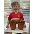 Oliver's plants are growing well!