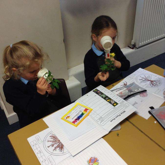 Observing plants closely Year 1 Science