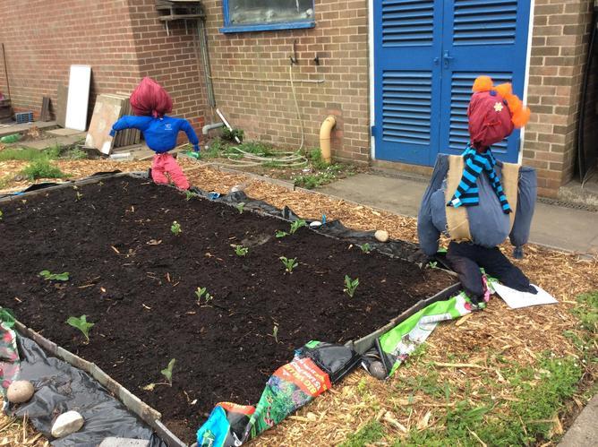 Reception's Scarecrows